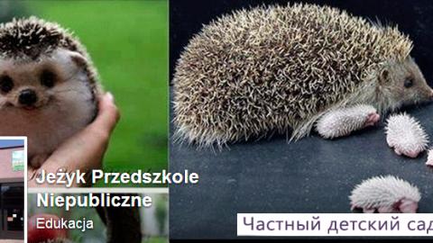Жизнь в Польше – частный детский сад, взгляд изнутри
